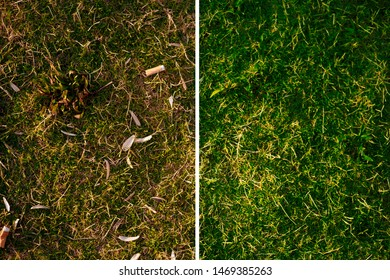 Lawn with seed shuck and cigarette butts matching before and after cleaning. The image is divided by white vertical line. Concept of combating environmental problems pollution.