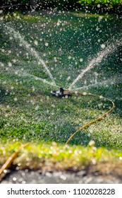 Lawn sprinkler spraying water over green grass, irrigation system.