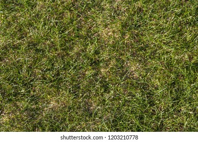 Lawn texture in natural look