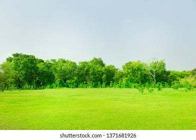 Lawn and trees green background with Beautiful lawn