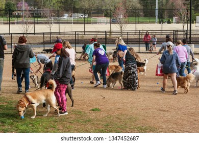 Lawrenceville, GA / USA - March 24, 2018:  Several dogs sniff plastic easter eggs that contain doggy treats at the Dog Gone Egg Hunt on March 24, 2018 in Lawrenceville, GA.