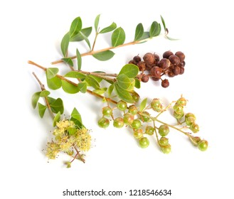 Lawsonia inermis, also known as hina or henna tree or mignonette tree and Egyptian privet. Isolated.