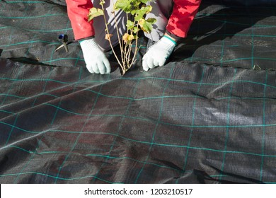Lay out the weed fleece