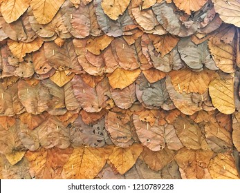 layer of dry leaves yellow and brown shade color autume texture background
