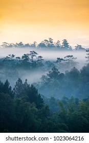 Layer of pine tree and fog landscape