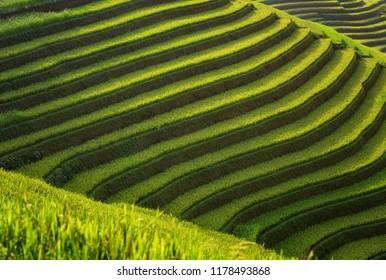 Layer of Rice fields on terraced of Mu Cang Chai, YenBai, Vietnam. Vietnam landscapes.