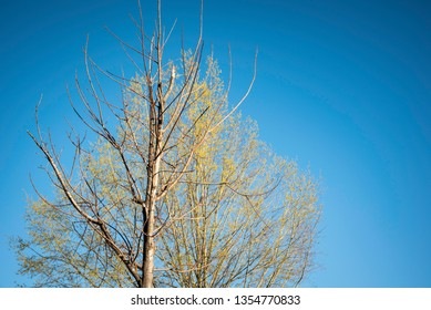 A layered juxtaposition of two trees -- one with leaves and one without leaves in a horizontal image format.