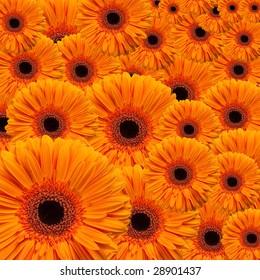 layered orange flowers