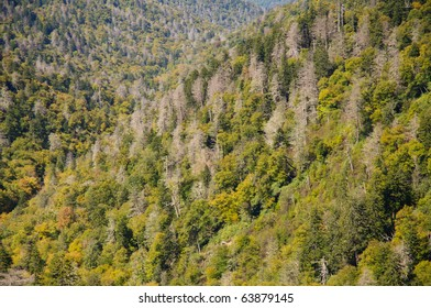 layers of dead trees and spruce on mountains