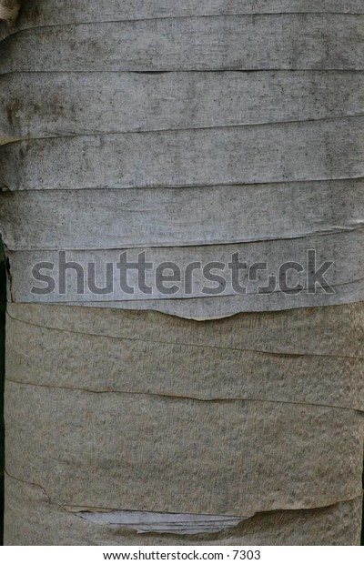 layers of papery thin wood
