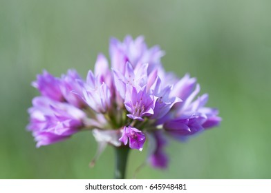Layers of purple flower cluster blur into the background