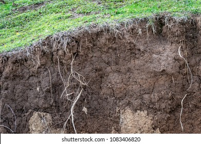 Layers of soil wet roots soil profile soil zones grass growing