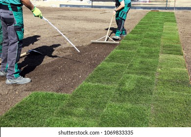 Laying rolled turf