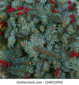 Layout made of Christmas tree branches and red berries. Mockup, flat lay. New Year winter season concept