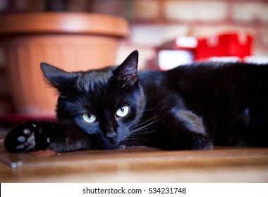 lazy black cat laying by fireplace and Christmas tree - cozy home concept