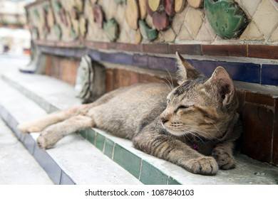 A lazy brown cat doze off in the temple.