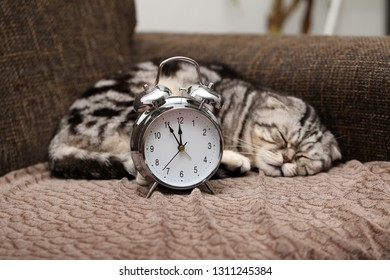 Lazy cat does not want to get up early on Monday morning