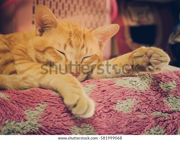 Lazy cat full asleep on the beautiful pink heart pillow on the afternoon time with soft focus