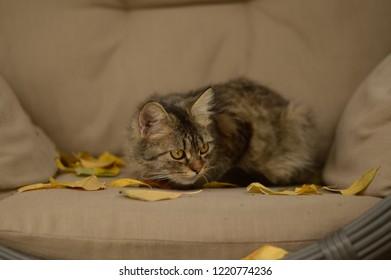 lazy cat garden autumn