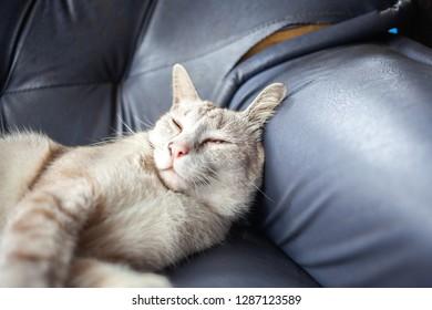 lazy cat on sofa