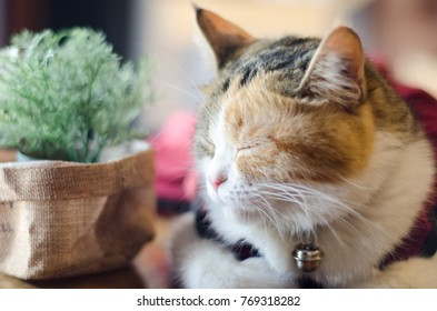 Lazy cat want to sleep on wood table.