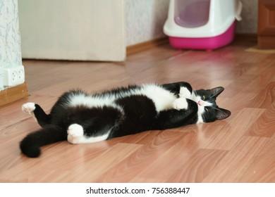 Lazy crazy funny cat