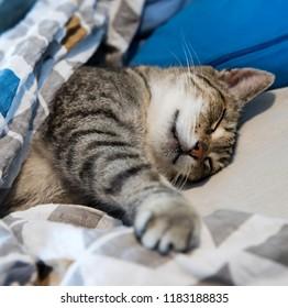 Lazy cute cat