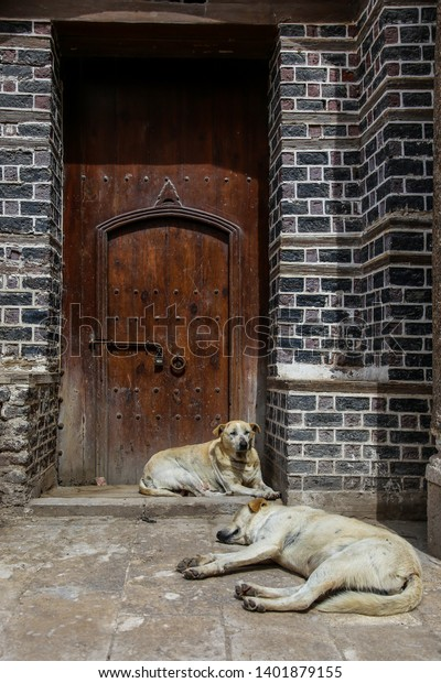 lazy Dogs laying/sleeping in front of door