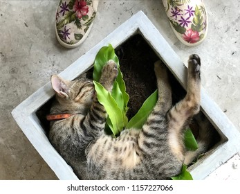 Lazy Kitten (Tabby cat) sleep peacefully on Green tree in pot. Selective focus. The concept of pets.
