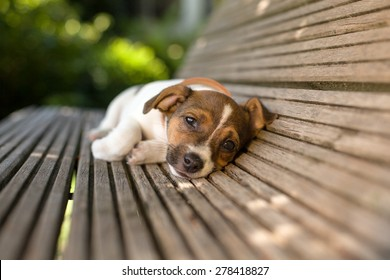 A lazy puppy looks in a funny way straight forward while laying on a wooden bench.