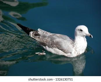 Lazy seagulls of island Losinj near the banks of Veli Losinj
