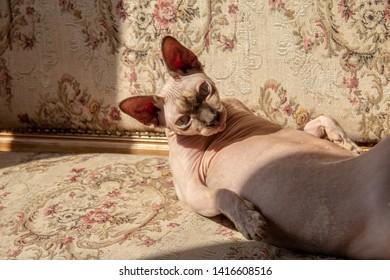 Cat Sunbathing Images, Stock Photos & Vectors | Shutterstock