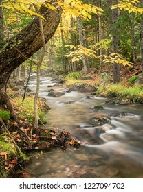 A lazy stream in autumn with a curved tree trunk in the foreground.  A lot of yellow leaves are visible.