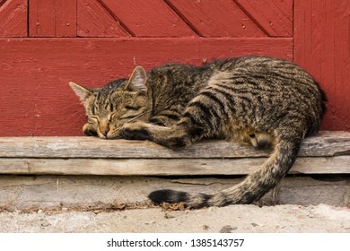 A Lazy Tomcat Taking a Nap by the Door