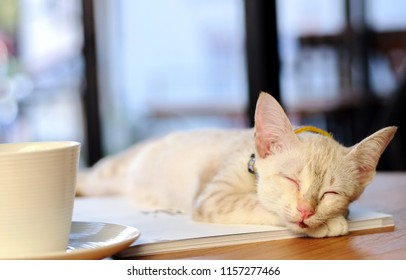 Lazy White color Kitten (Tabby cat) sleep peacefully on the desk next to the glass of coffee. . Selective focus. The concept of pets.