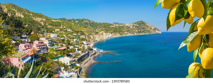 Le Fumarole beach near Sant'Angelo on Ischia island, Italy. Sant'Angelo is small village within comune of Serrara Fontana, Ischia. Bunches of fresh yellow ripe lemons on foreground.