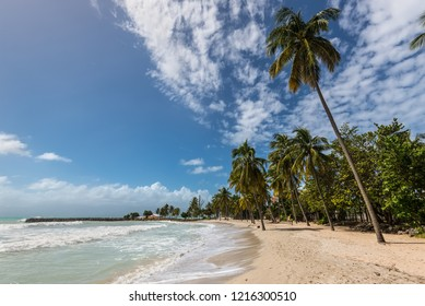 Le Gosier, Guadeloupe - December 20, 2016: Paradise beach and palm trees near Le Gosier in Guadeloupe, an overseas region of France, Lesser Antilles, Caribbean.