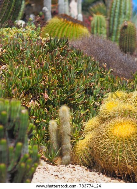 Le Jardin Exotique Deze Cactus Garden Stock Photo Edit Now 783774124