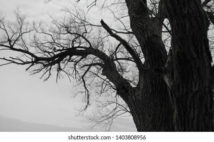Le vieil arbre en hiver près du lac à Hudson. La beauté de ses branches qui s'étendent vers l'eau. La tranquilité du moment. The beauty of the old tree  in Hudson. Solid, stable and strong.