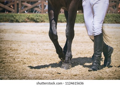 Leading horse on dressage competition, man with leather boots walking with horse in paddock