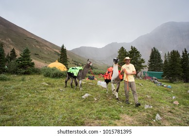 LEADVILLE, COLORADO USA - AUGUST 19, 2017: Event crew with Lamas at the Hope Pass aid station during the Leadville Trail 100 Ultra, Leadville, Colorado, USA.
