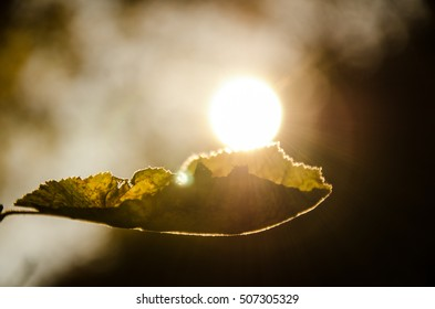 Leaf about to fall from branch