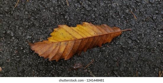 Leaf against black asphalt.