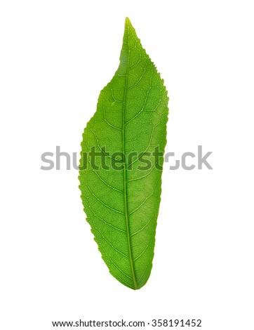Leaf Anatomy Diagram Stock Photo Edit Now 358191452 Shutterstock