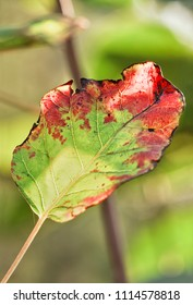 Leaf in autumn colors in a green forest