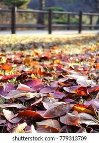 leaf, autumn garden