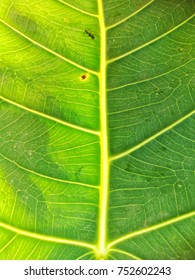 the leaf background.