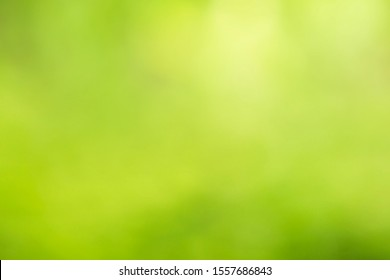 Leaf background on a green background