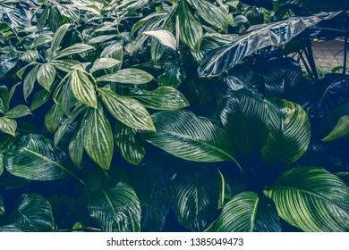 Leaf to backgrounds. Retro tone. Dark  tone.