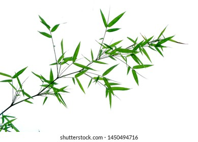 Leaf of Bamboo isolated on white background .shallow dept of field.idea use for background